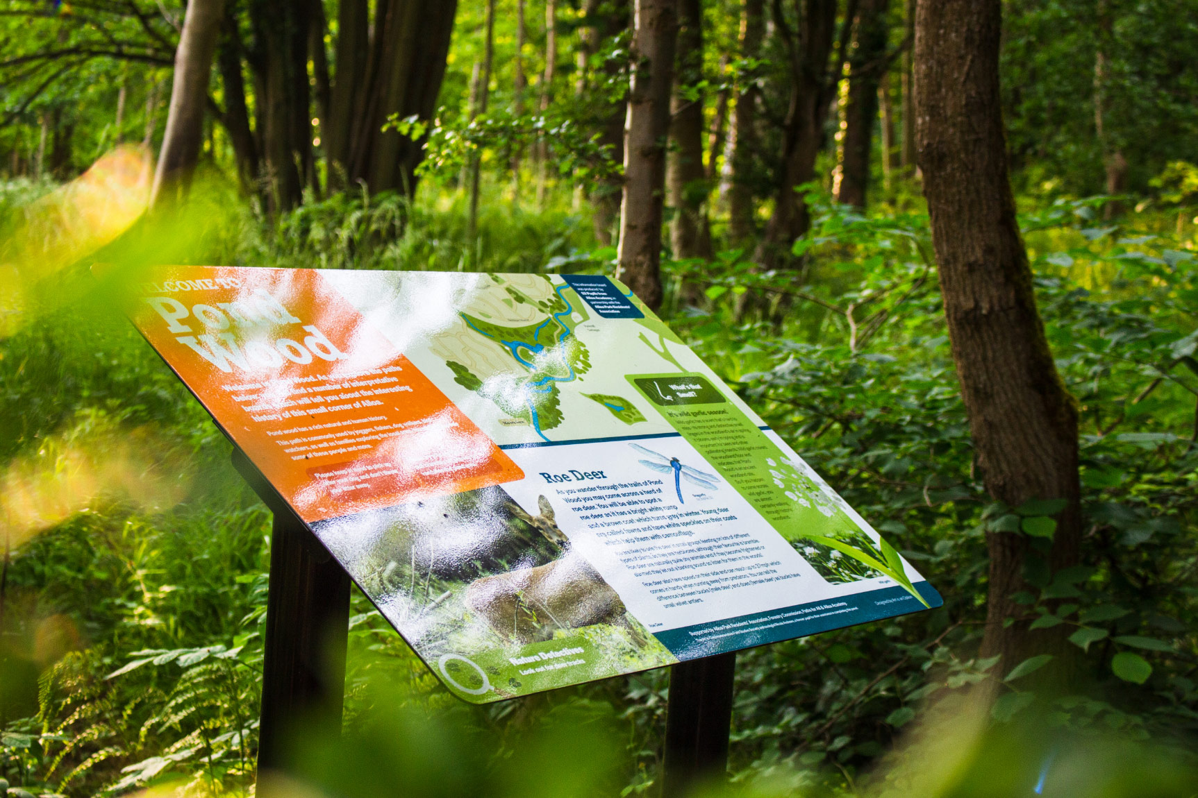 This is an image of an interpretation Display Panel located at Pond Wood Alloa. The panel shows various wildlife from the area and historical information.